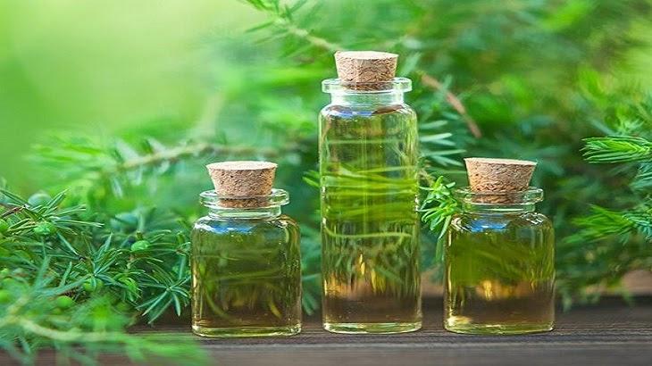 Các loại tinh dầu tràm phổ biến