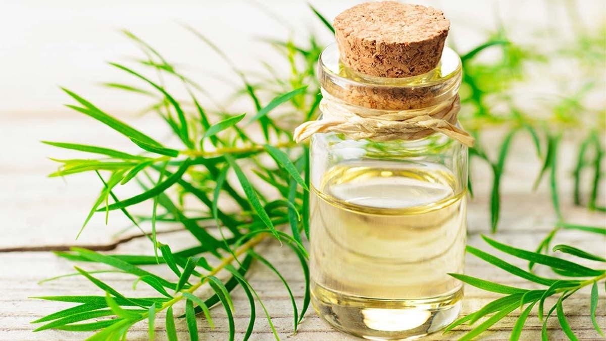 Các loại tinh dầu tràm phổ biến trên thị trường hiện nay