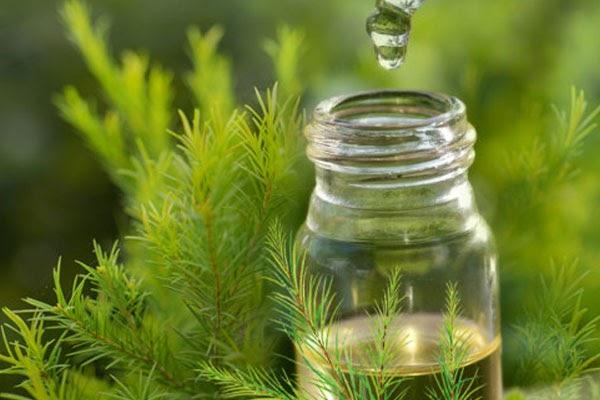 Những lưu ý quan trọng khi sử dụng tinh dầu tràm cho trẻ em sử dụng như thế nào