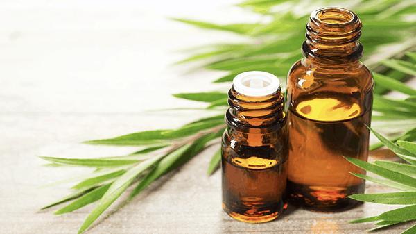 Tinh dầu tràm hoa nén được chế biến rất công phu