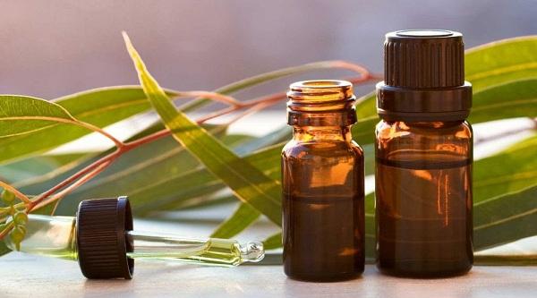 Để trả lời cho câu hỏi tinh dầu trầm hương mua ở đâu? Các bạn cần biết không phải cây trầm nào cũng sản xuất được tinh dầu
